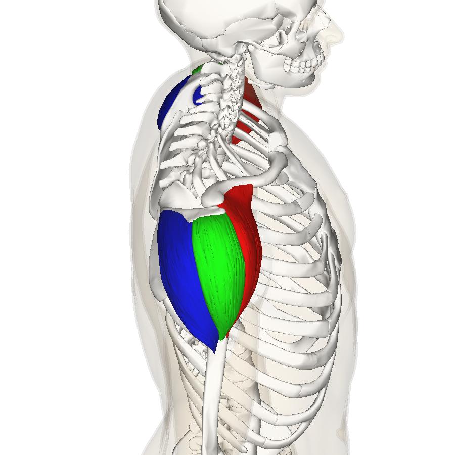 Rot: vorderer Kopf, Grün: mittlerer Kopf, Blau: hinterer Kopf
