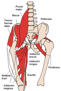 Anterior Hip Muscles 2 200x300 - Crunches (Bauchpressen) Anleitung: richtige Ausführung fürs Bauchtraining
