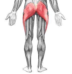 Größter Gesäßmuskel