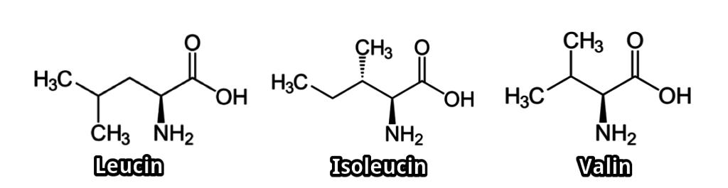 Bcaa Leucin Isoleucin und Valin Strukturformeln 1024x265 - BCAAs (Branched Chain Amino Acids): Wirkung, Einnahme und Studien