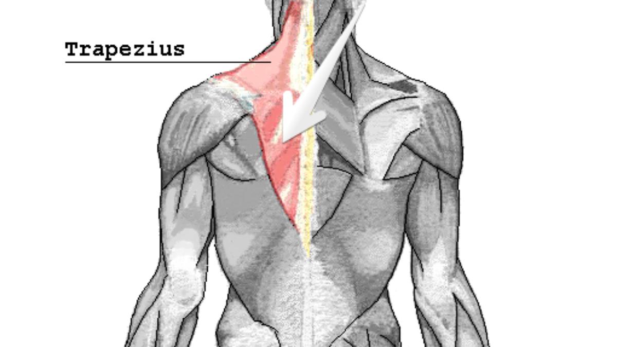 Zwischen schulterblatt rückenschmerzen Rückenschmerzen Schulterblatt